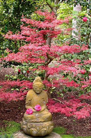japanese-buddha-and-maple at Lotusland