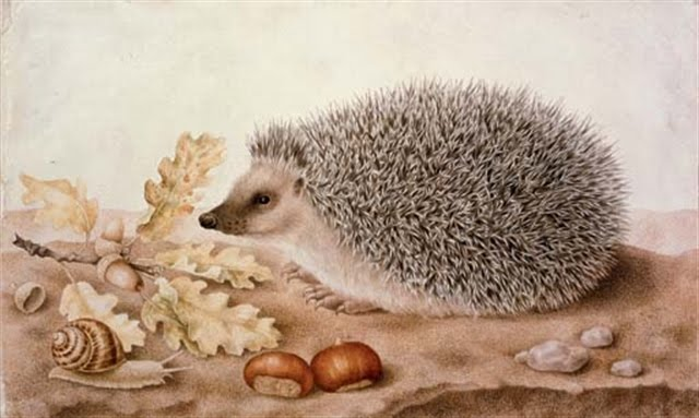 Giovanna Garzoni, A hedgehog in a landscape